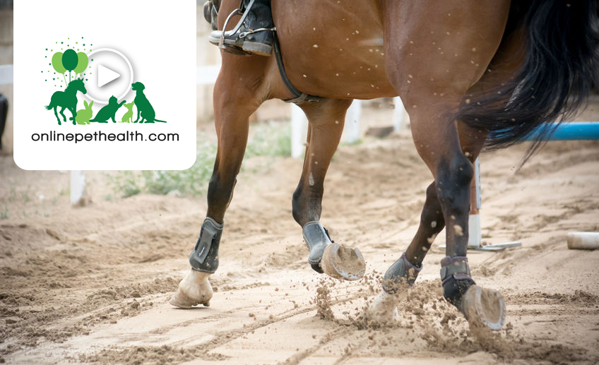 Onlinepethealth Equine Lameness Indicator Blog