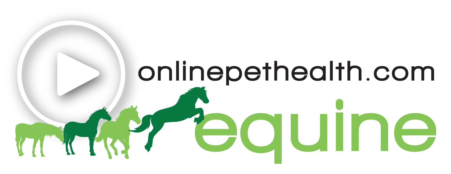 Free Webinar December 16th Developing >> Equine Physiotherapy Rehab Live Webinars Online Training