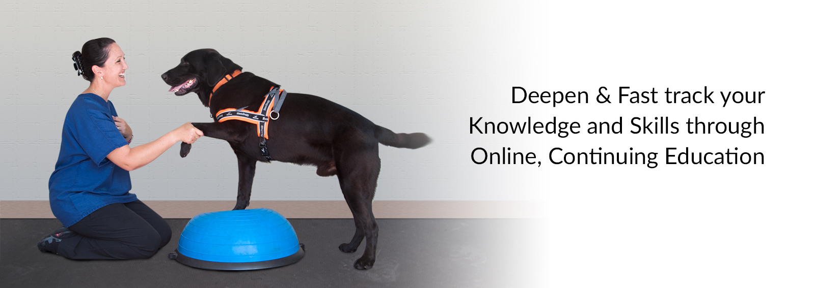 Onlinepethealth Small Animal Intro Slide