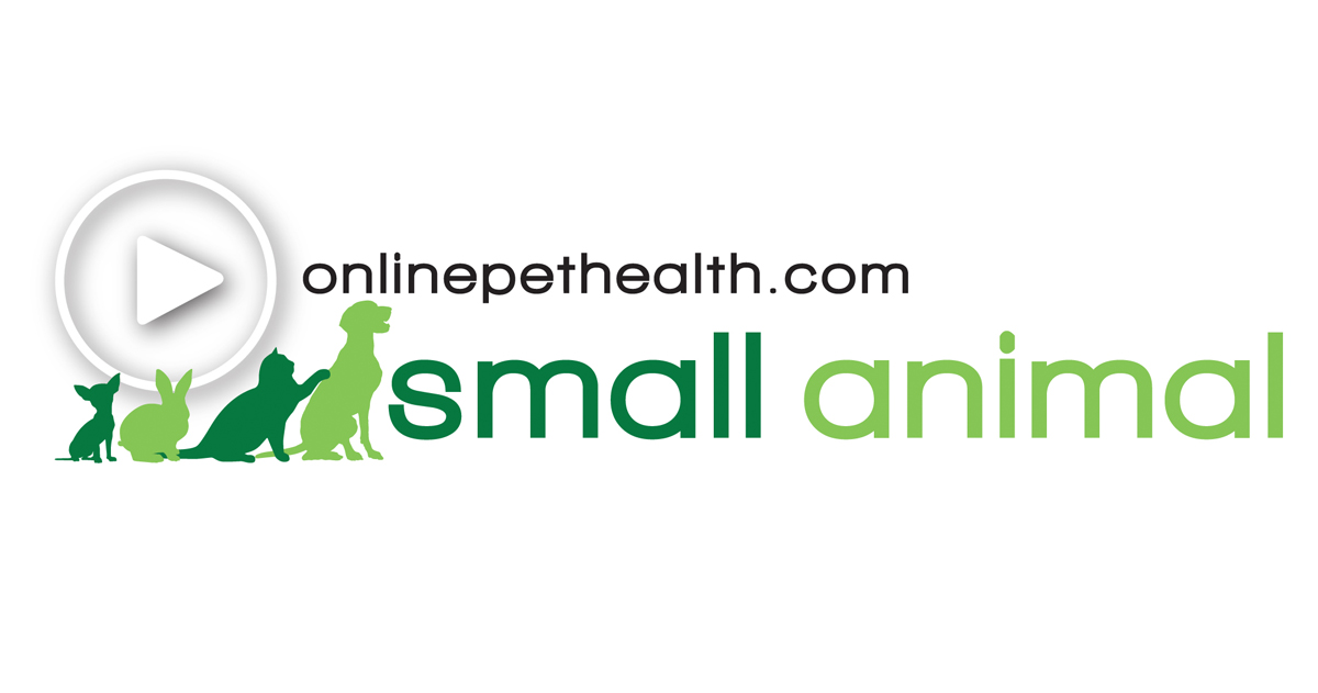 Onlinepethealth Small Animal Feature Image Logo