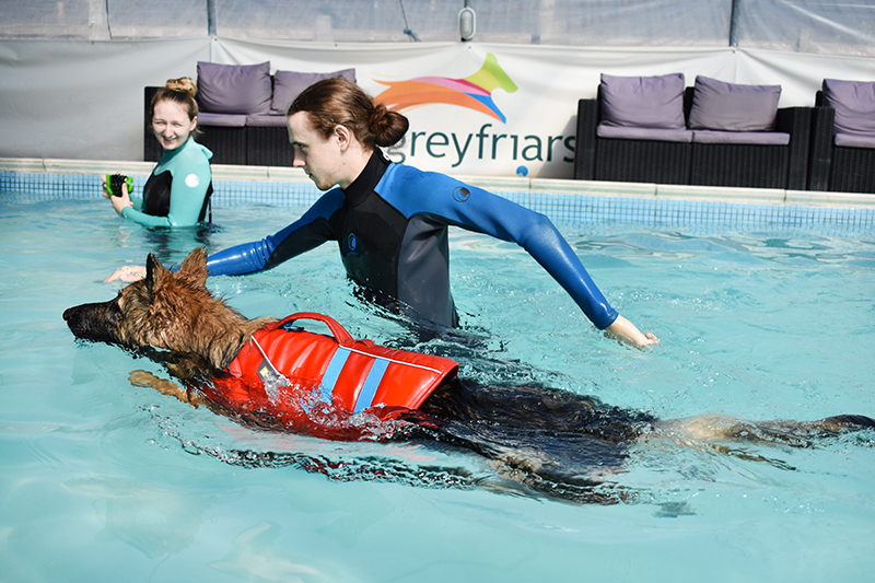 Onlinepethealth Hydrotherapy Different Dogs