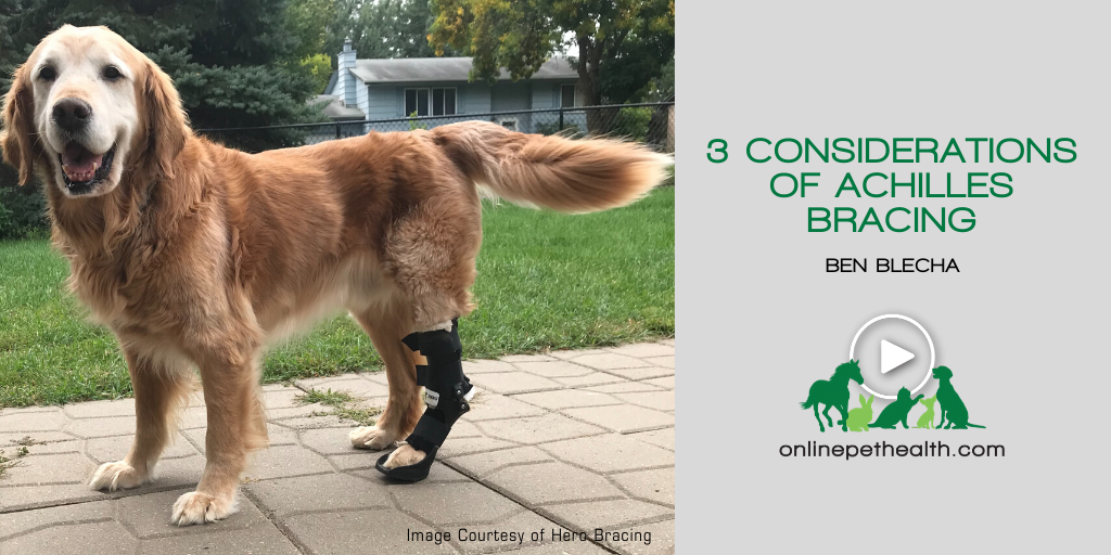 3 Considerations of Achilles Bracing