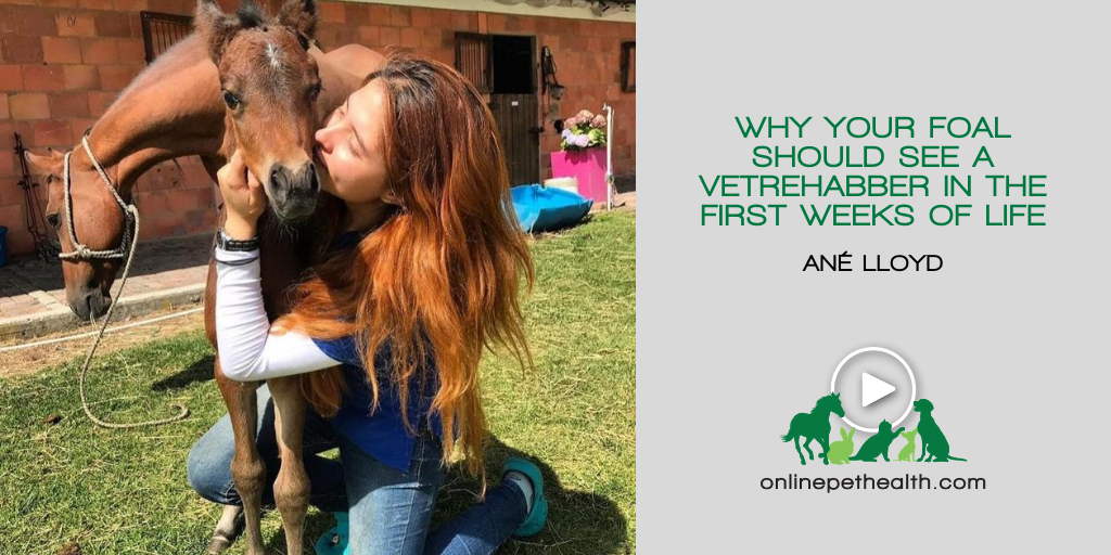 Why Your Foal Should See a Vetrehabber in the First Weeks of Life