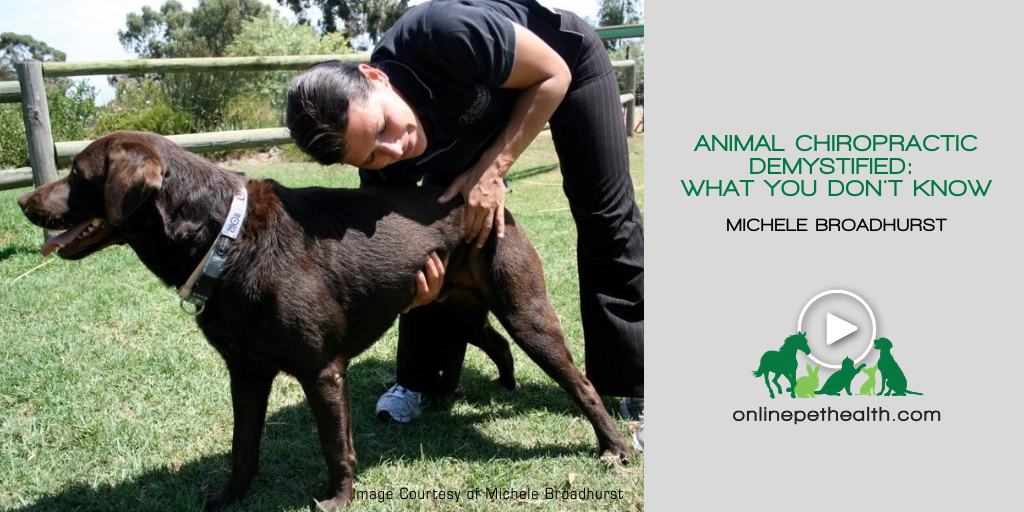 Animal Chiropractic Demystified: What You Don't Know