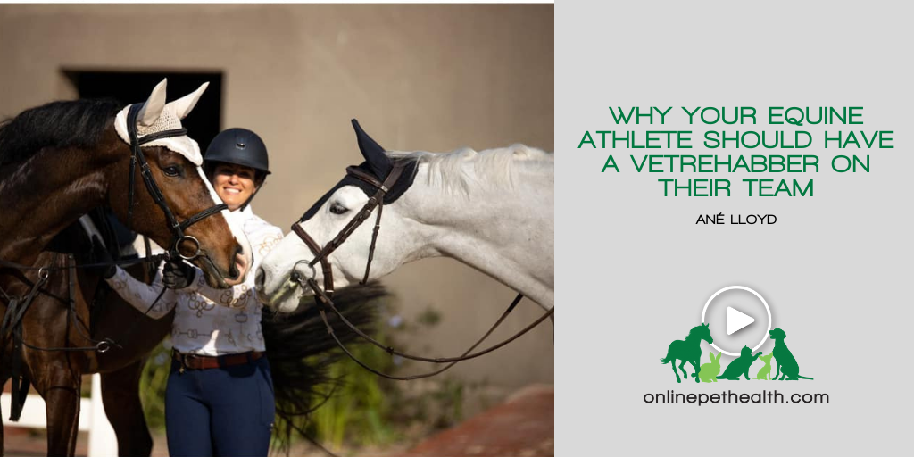 Why your Equine Athlete Should Have a Vetrehabber on their Team