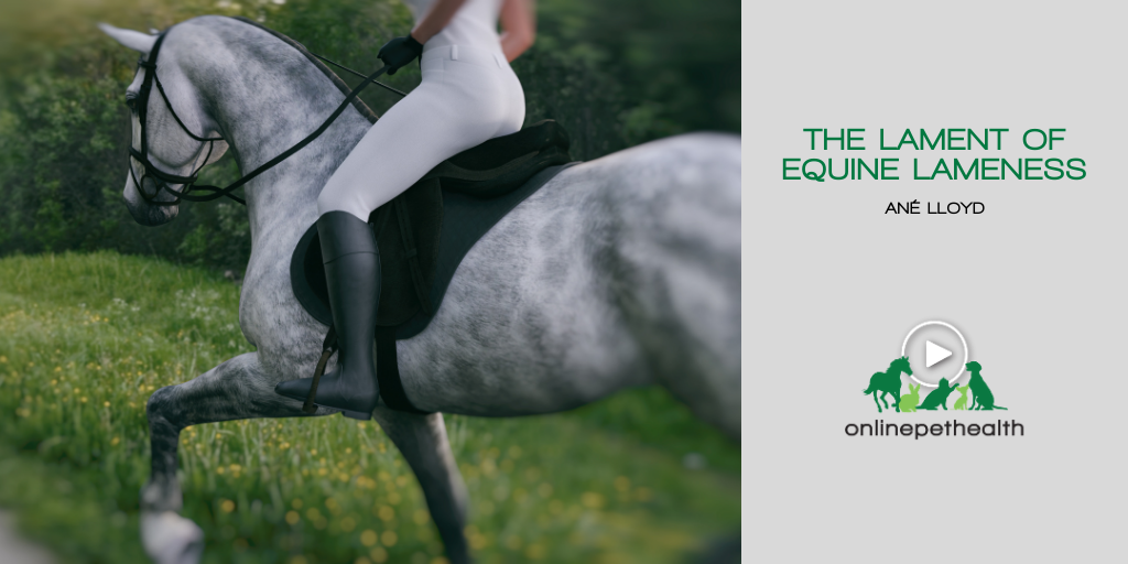 The Lament of Equine Lameness