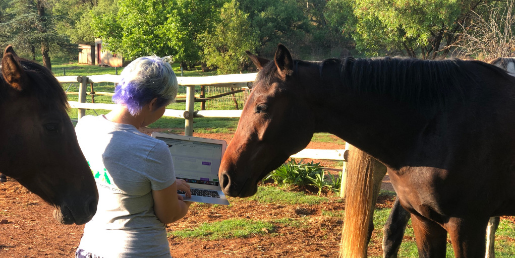 11 Must Read Equine Blogs